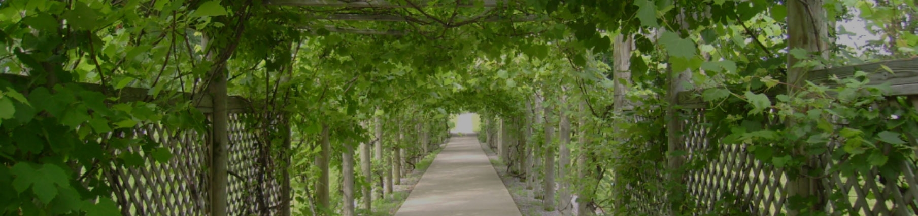 Grape arbor located at Notre Dame of Elm Grove, Elm Grove, Wisconsin